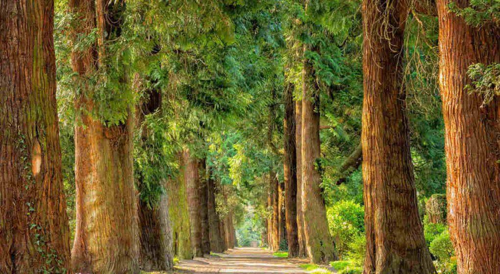 Die Energie und das soziale Leben der Bäume