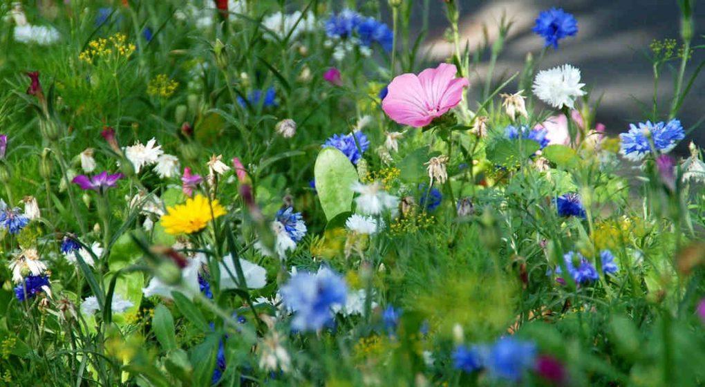 Die Heilkraft der Kräuter nutzen – Apotheke Mutter Natur