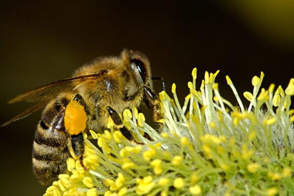 Das ist eine Biene - Unterschied erkennen