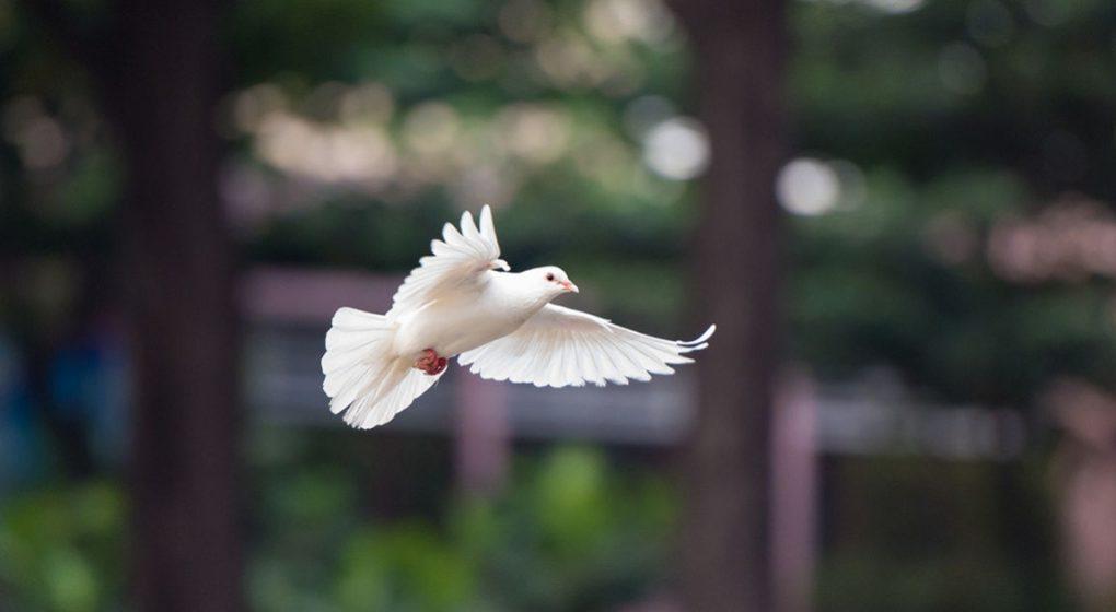 Resilienz – Aus Krisen an eigener Stärke gewinnen. Buchrezension des Buches Weiße Taube von Sophie Untersberger