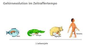 Grafik Evolution